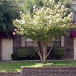 Hulen Park Place Townhomes Apartment Property Ground